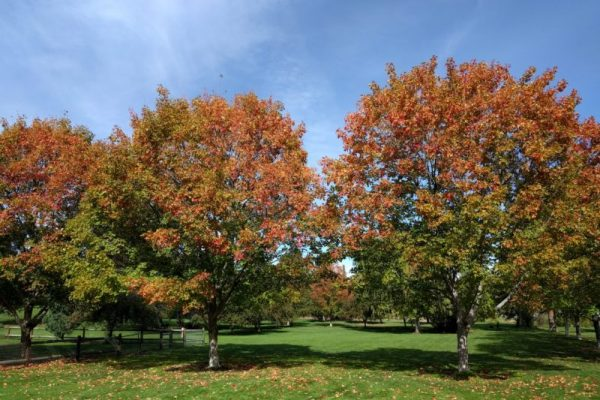 hollinshead park